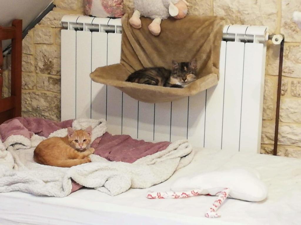 OEN, chaton roux de 3 mois - marrainé par Mahé Recei121