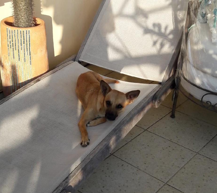 SOS petite louloute de 8 kg à la Réunion - cherche accueil fin octobre ou adoptants Resize11