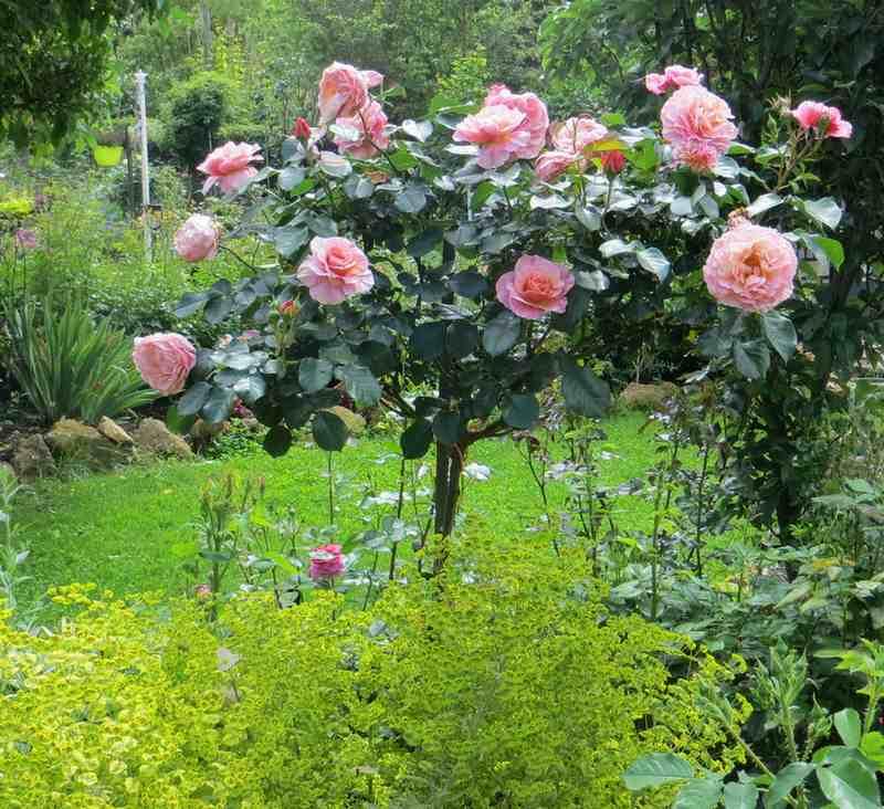 rosier Aveu 09410