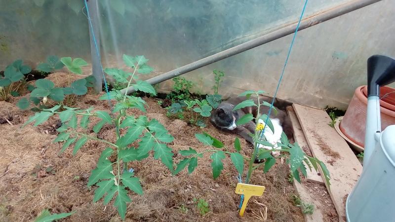 Tomates 2018 - Page 3 P_201812