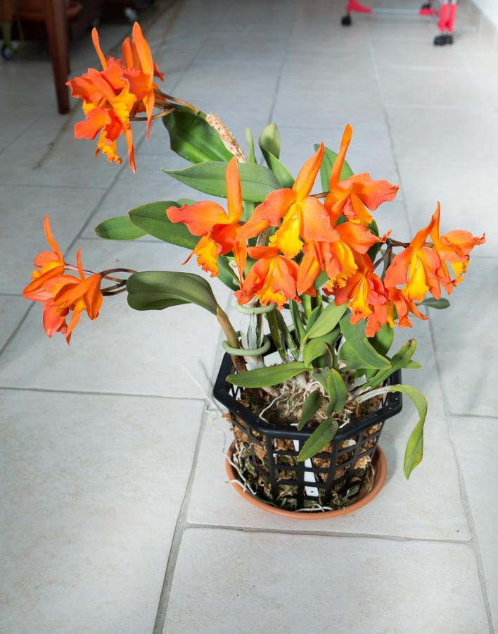 Une partie de mes orchidées... - Page 27 Img3_110