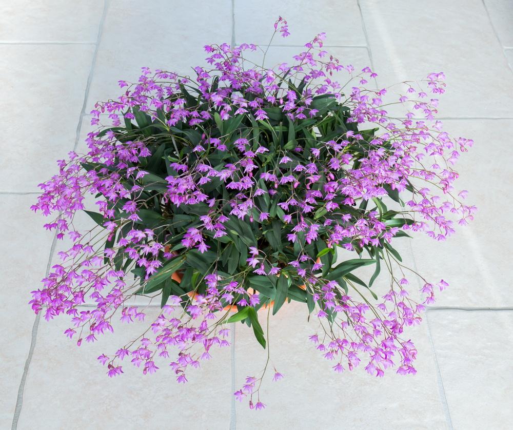Une partie de mes orchidées... - Page 27 Img3_215