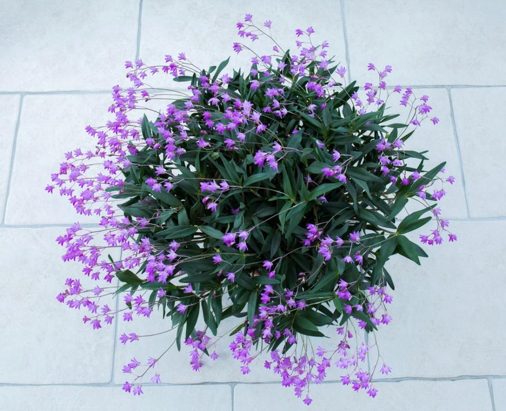 Une partie de mes orchidées... - Page 28 Img3_310