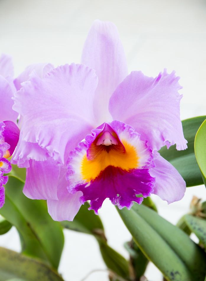 Une partie de mes orchidées... - Page 28 Img3_312