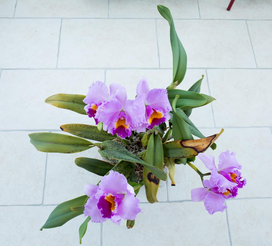 Une partie de mes orchidées... - Page 28 Img3_313
