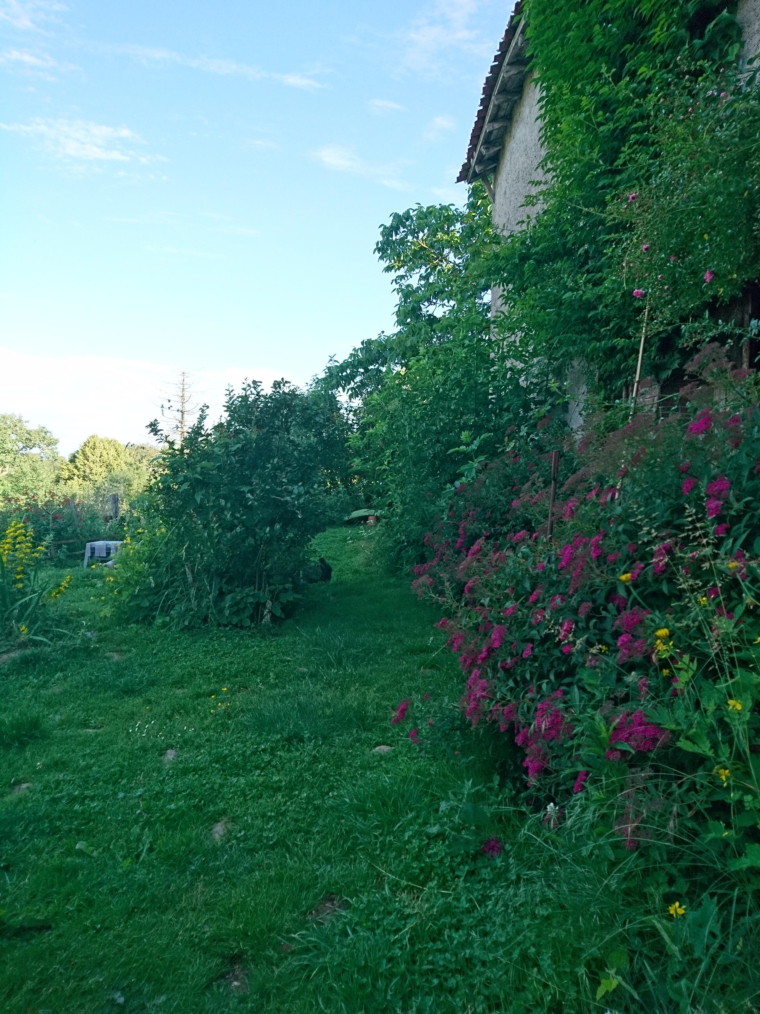 Orpington GR Saumon Doré Coucou (critiques acceptées) - Page 17 Dsc_2912