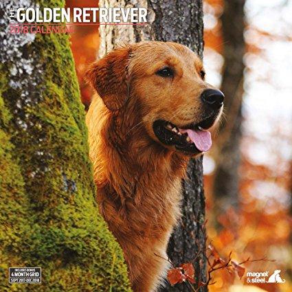 Petit clin d'oeil à vous passionnés du golden :) - Page 2 91sbfx10