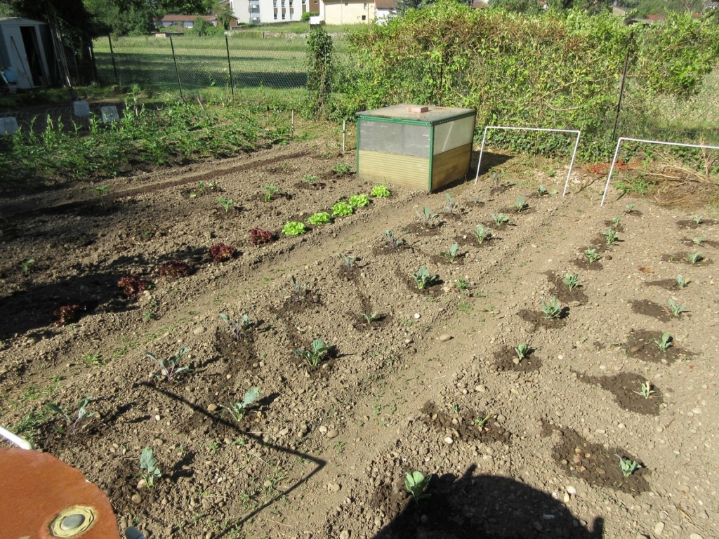 Le potager 2019 Img_0626