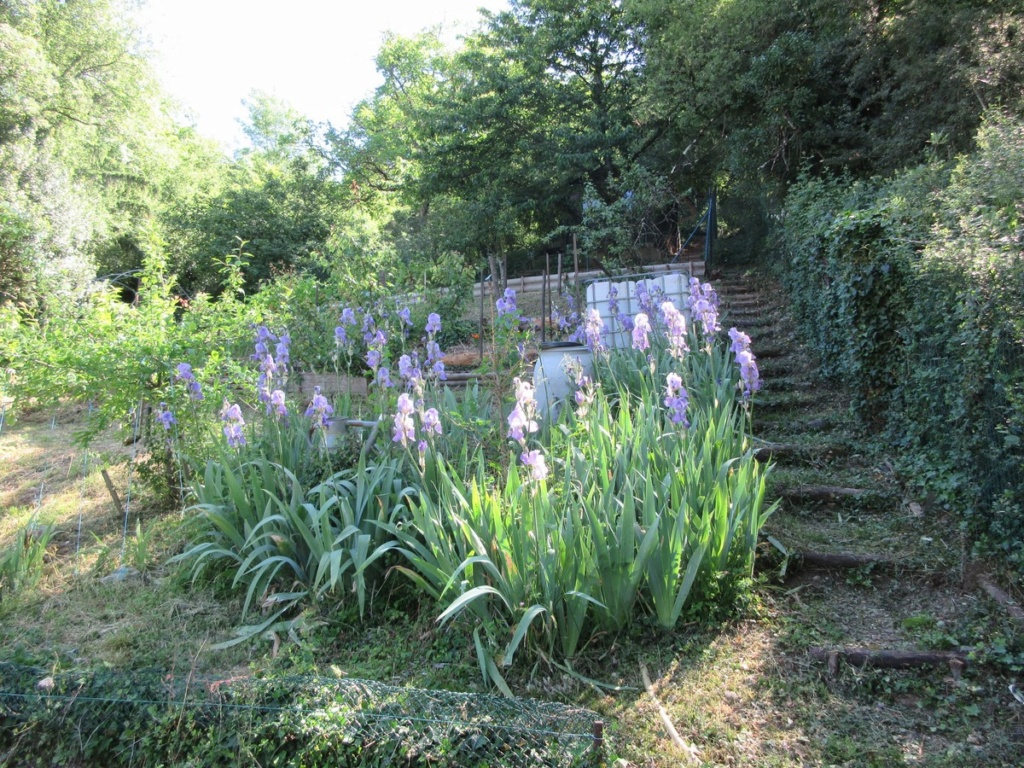 Le potager 2019 Img_0631