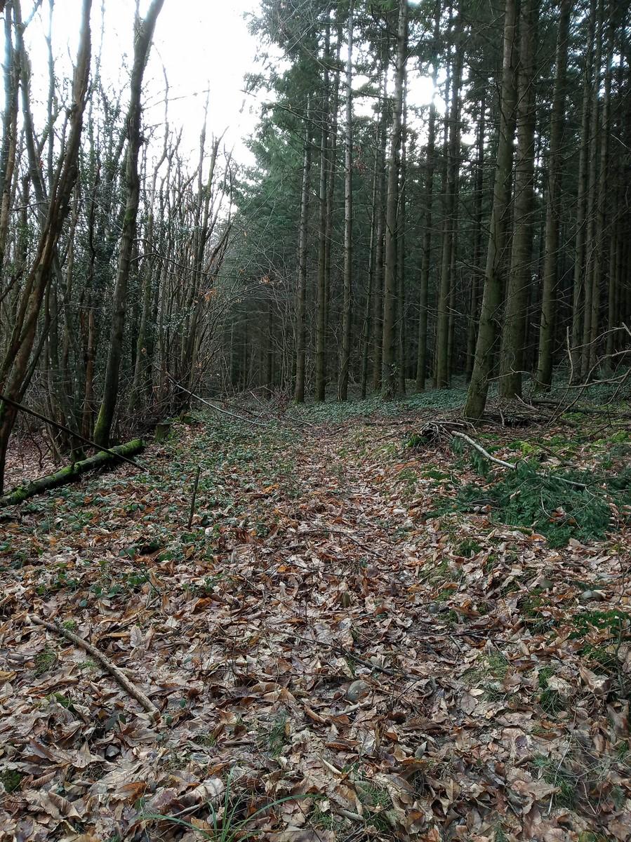 Une bonne matinée de chasse Img_2011
