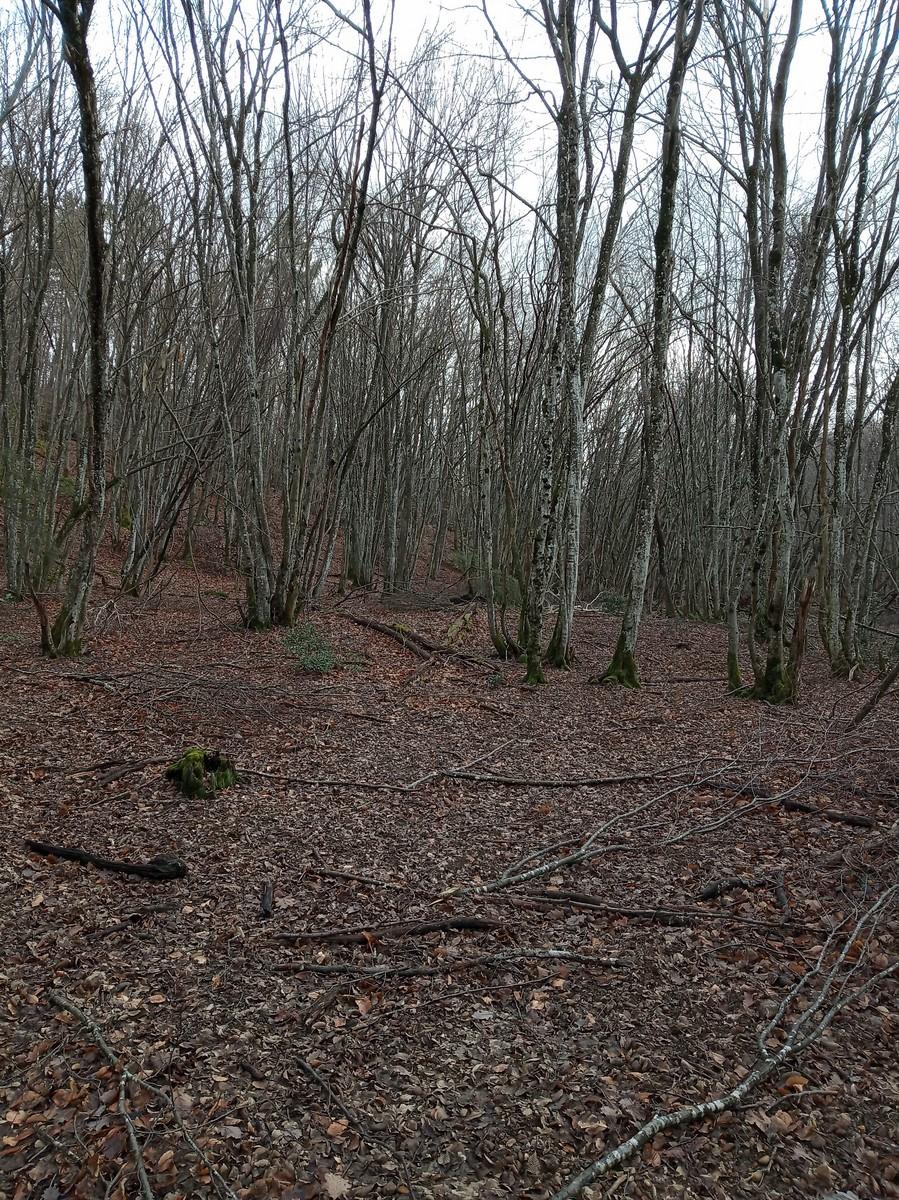 Une bonne matinée de chasse Img_2012