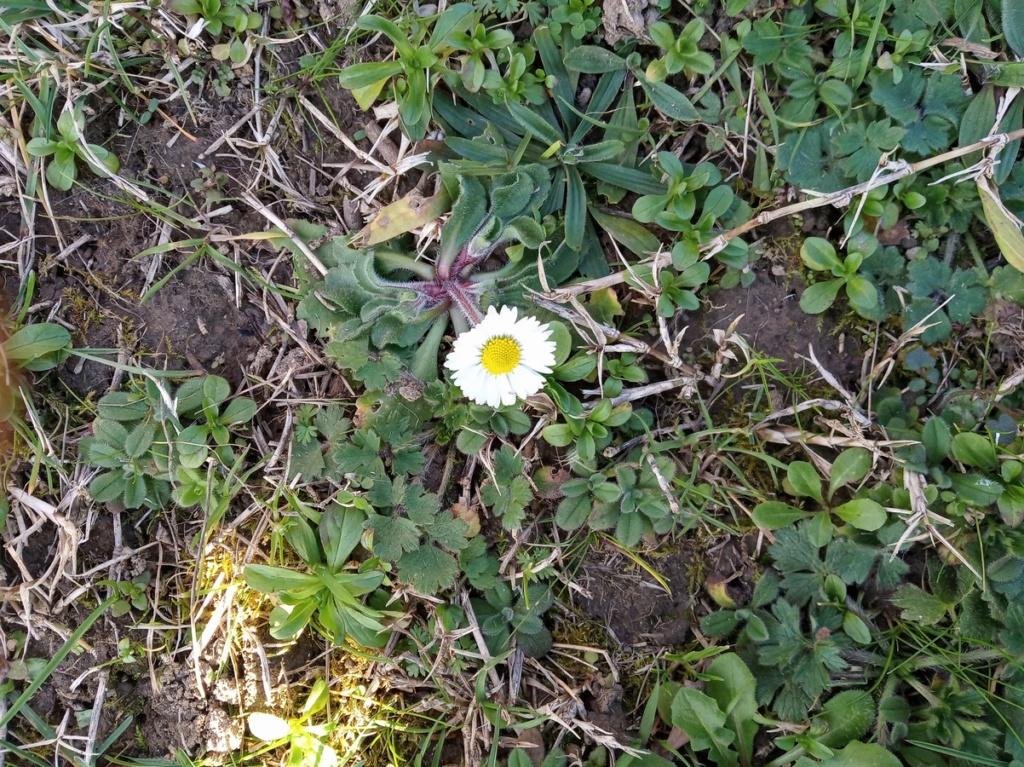 Une belle journée qui sent le printemps Img_2025