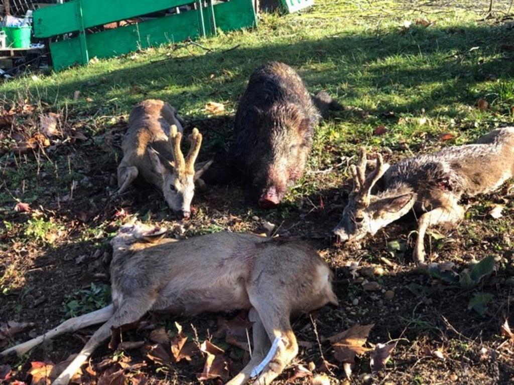 Une bonne matinée de chasse Save_211