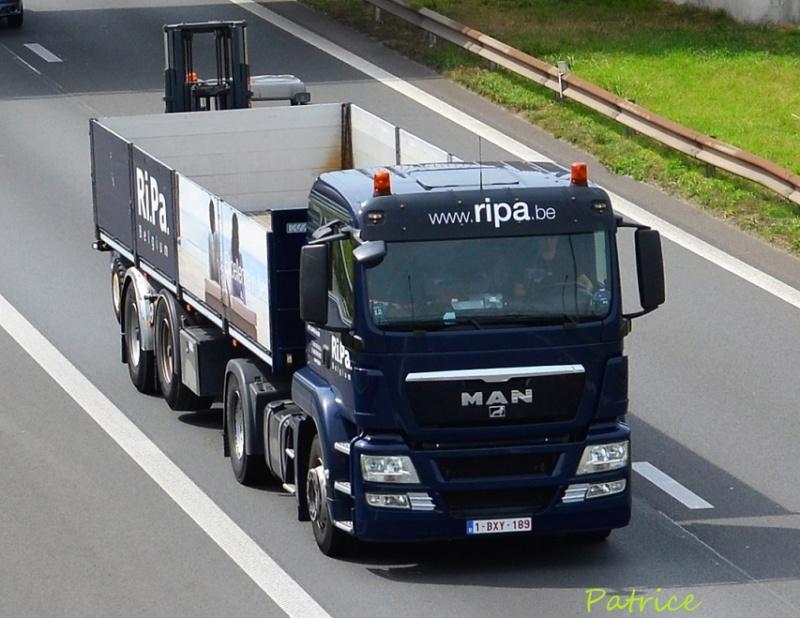 Ripa  (Laarne) 13020