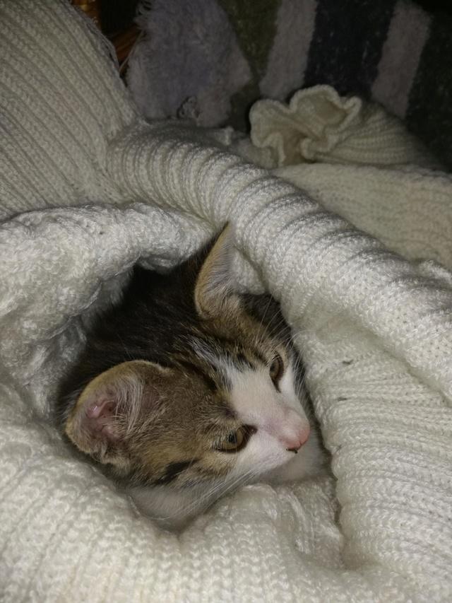 PEPITO, chaton mâle, né environ en mars 2018 - Pascani - adopté par Vanessa(83) Pepite10