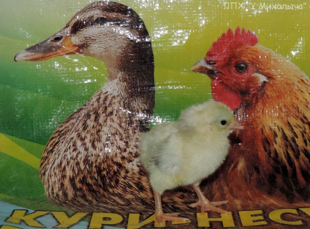 Карликовая дрезденская порода кур, Dresden bantam chickens Oeeez-10