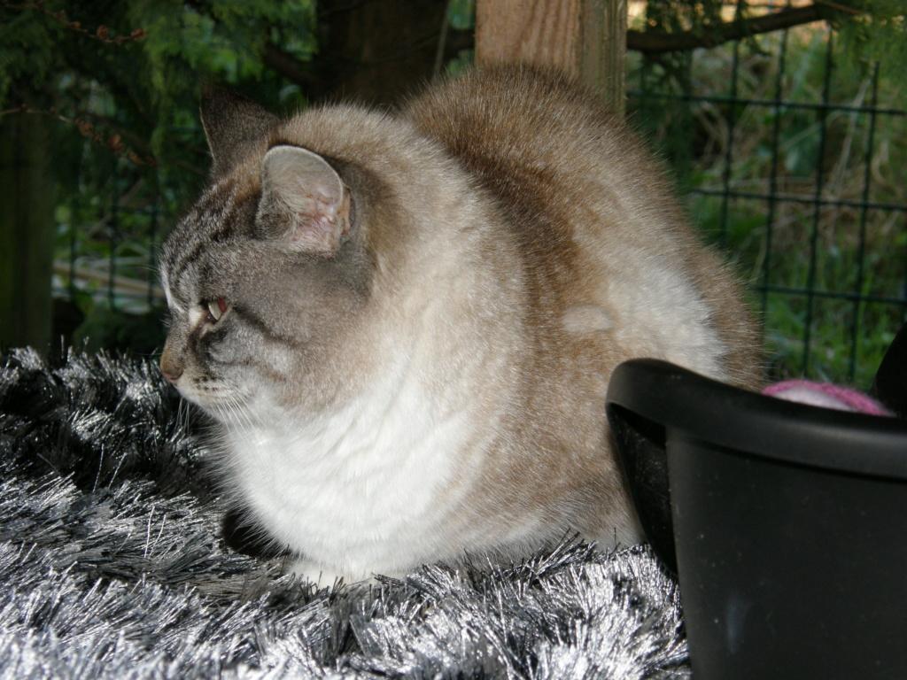 La face cachée de l'Ecole du chat de Quiberon - Page 10 P1190416