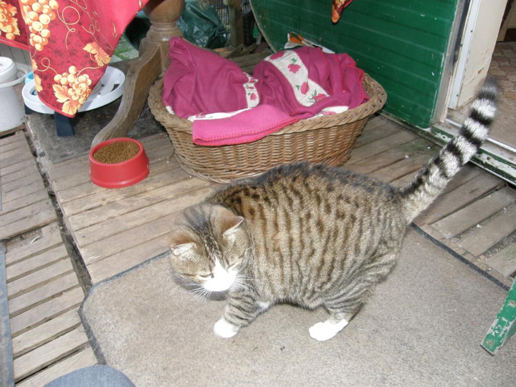 La face cachée de l'Ecole du chat de Quiberon - Page 10 P1190417