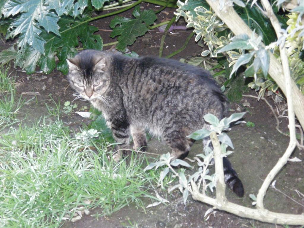 La face cachée de l'Ecole du chat de Quiberon - Page 9 P2240810