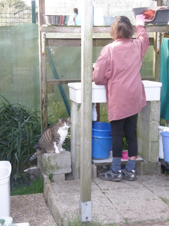 La face cachée de l'Ecole du chat de Quiberon - Page 10 P4051050