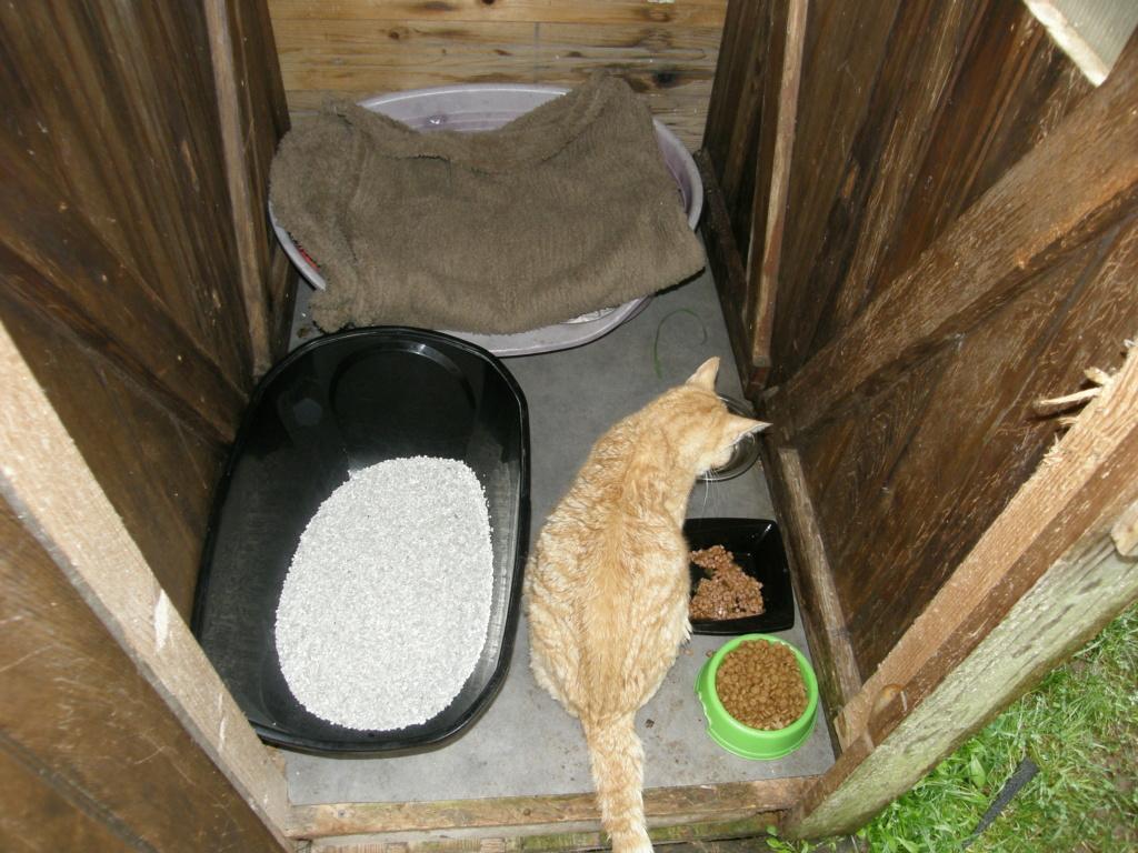 Des chats, encore des chats... - Page 17 Pb010125