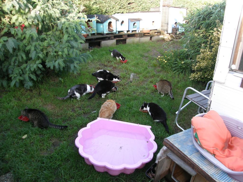 La face cachée de l'Ecole du chat de Quiberon - Page 10 Pb031211
