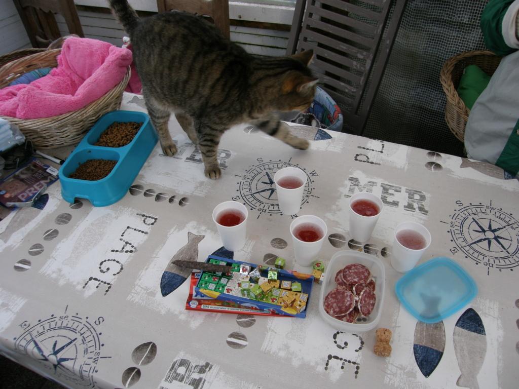 La face cachée de l'Ecole du chat de Quiberon - Page 10 Pc220123