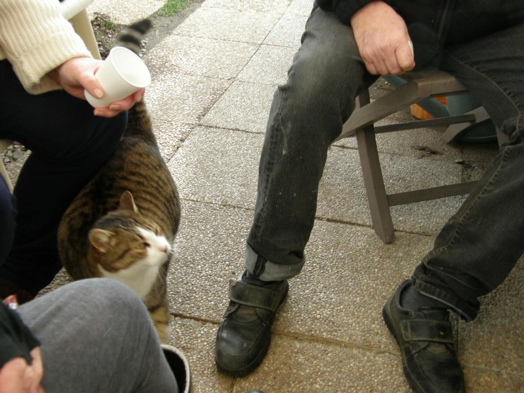 La face cachée de l'Ecole du chat de Quiberon - Page 10 Pc220124