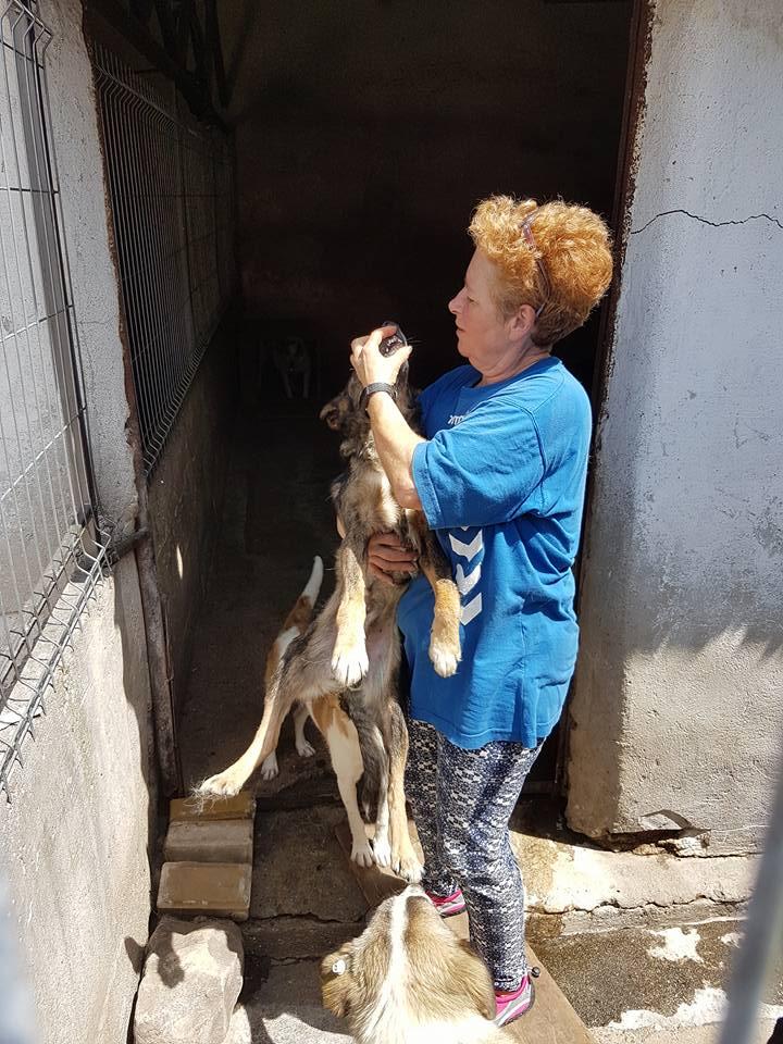 YANOU, M-X, Né 2012, 12 kg (ORASTIE/RUE) - Son maitre voulait le tuer - A disparu - 34884810