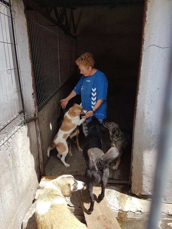 YANOU, M-X, Né 2012, 12 kg (ORASTIE/RUE) - Son maitre voulait le tuer - A disparu - 34904610