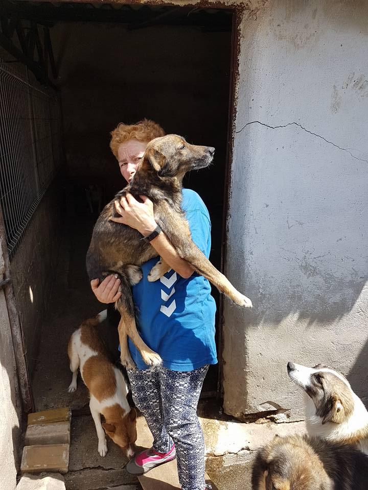 YANOU, M-X, Né 2012, 12 kg (ORASTIE/RUE) - Son maitre voulait le tuer - A disparu - 34929210