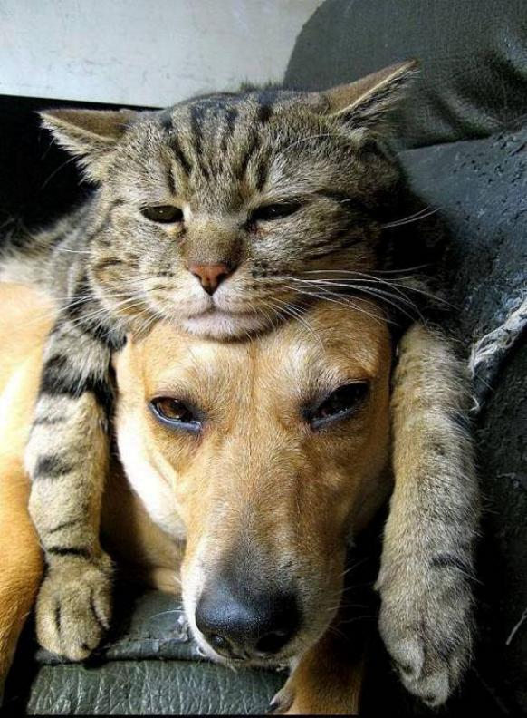 Les chats - nos petits compagnons - Page 5 X_9010