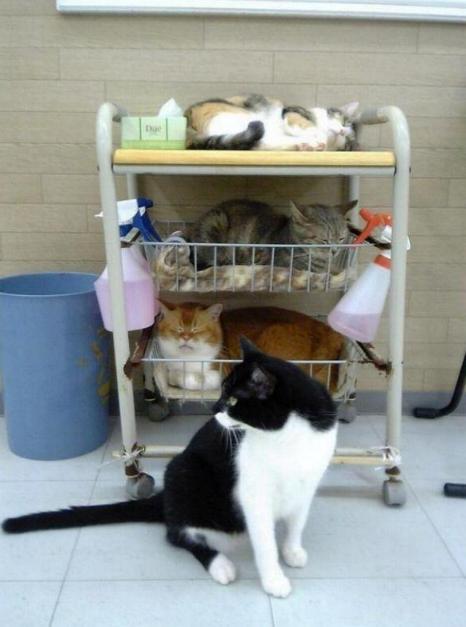Les chats - nos petits compagnons - Page 5 X_9210