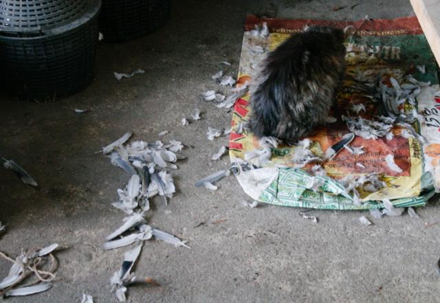 Psi, mačke i ostali - Page 23 E7003010