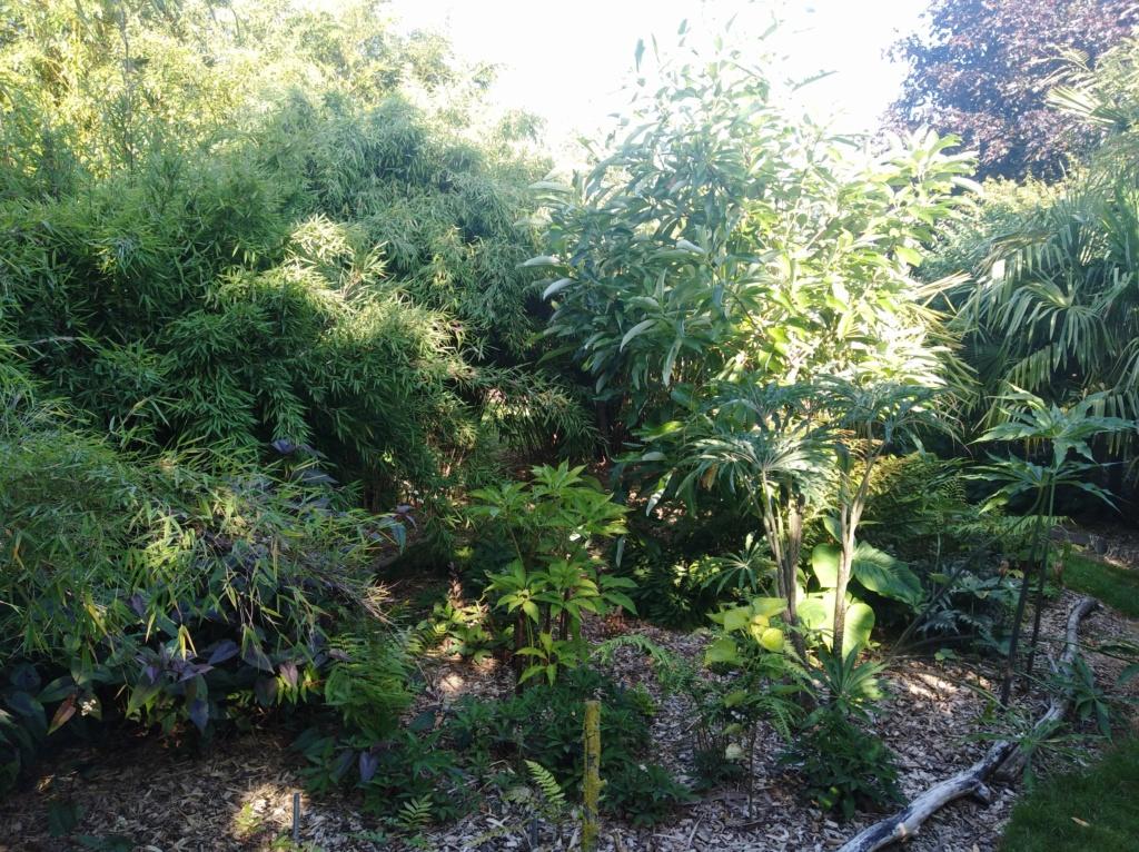 Le jardin d'olivierd en Belgique - Page 3 Img_2090
