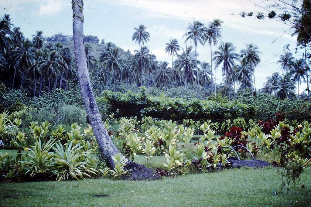 [CAMPAGNES C.E.P.] TAHITI - TOME 2 - Page 29 Pict0234
