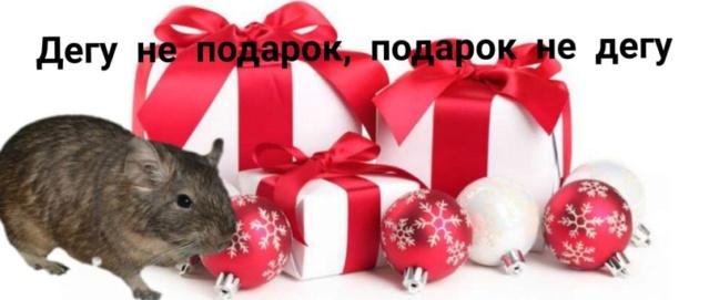 Подарок не дегу, дегу не подарок! Yghl1210