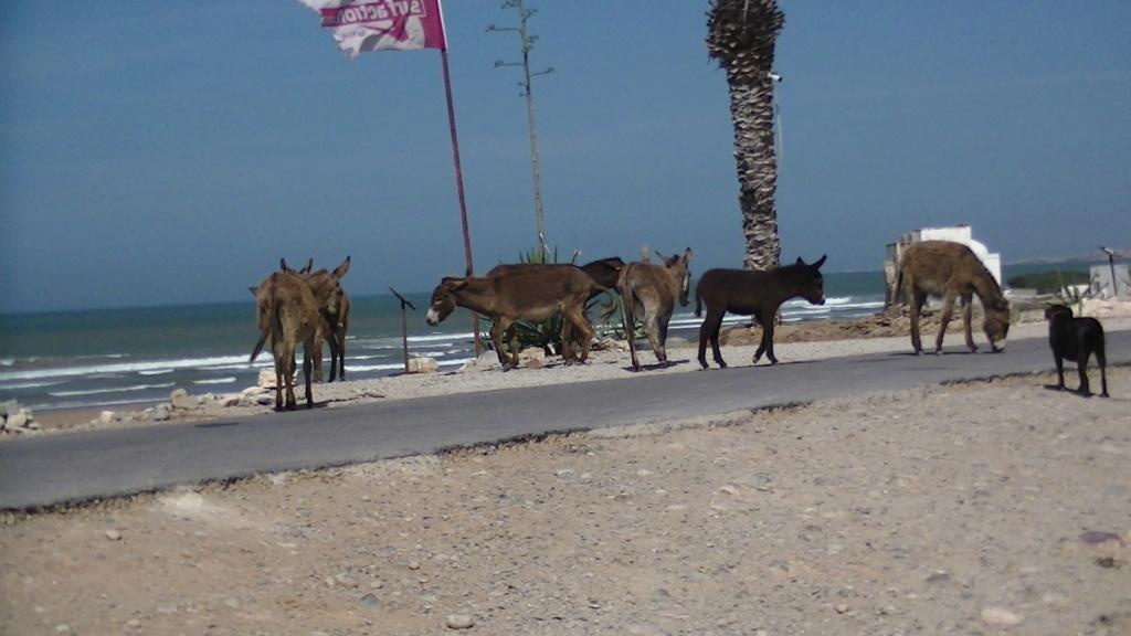 le confinement dans les campings au Maroc avril 2020 Pic_0010