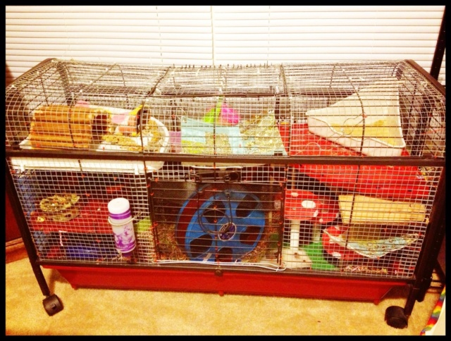 Small mouse cage C6c02510