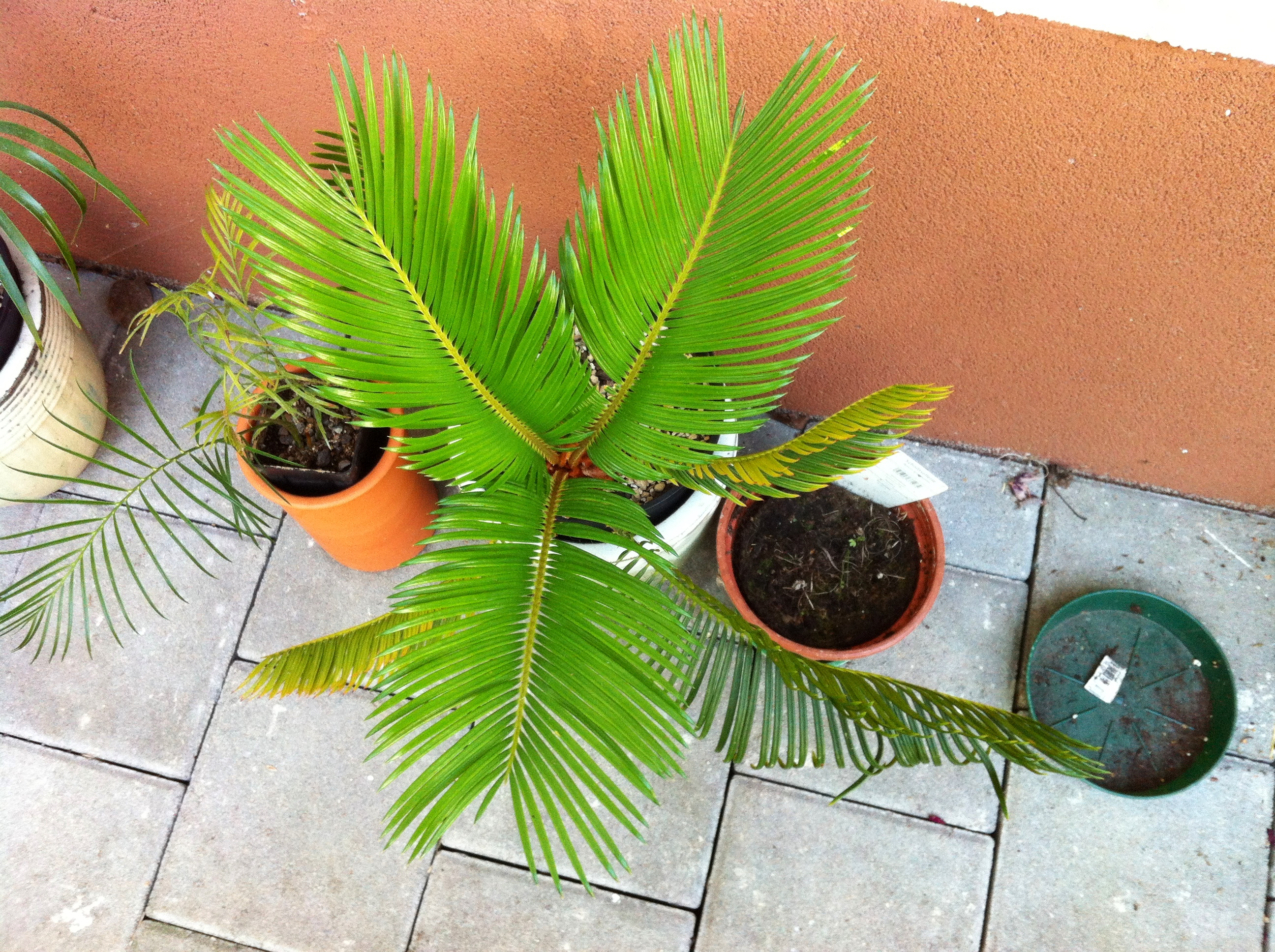 Kübelpflanzen - Seite 14 856a5b10