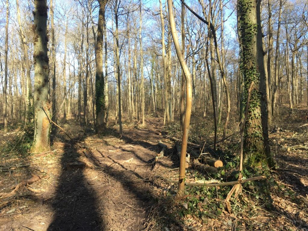 Forêt de Meudon  35574a10