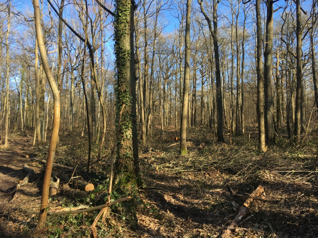 Forêt de Meudon  4a713f10