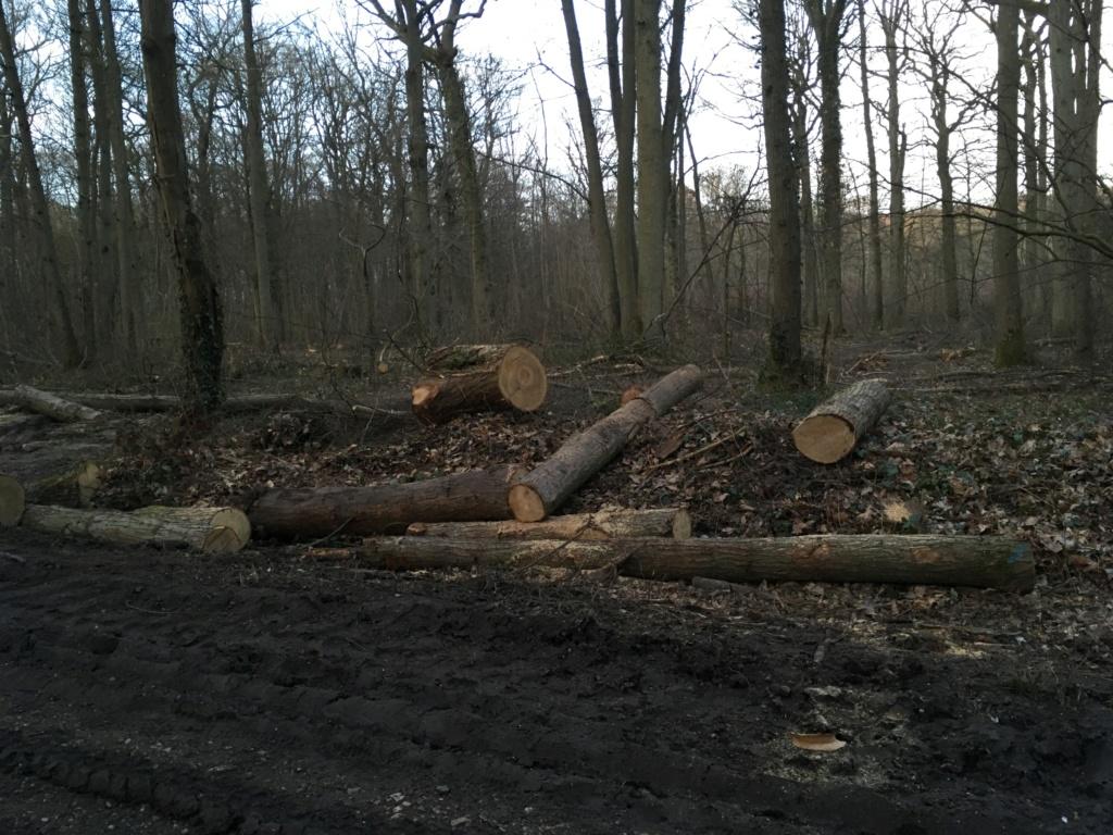 Forêt de Meudon  8f56f610