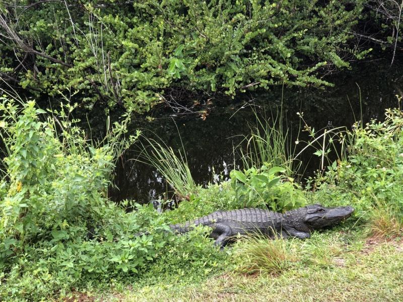 on en voit de belles en Floride !!! 71_cro10