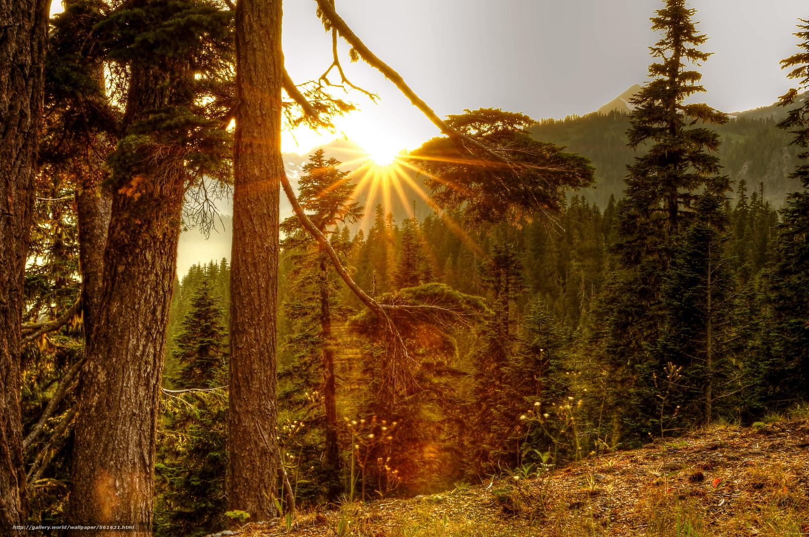 Sunce izlasci i zalasci - Page 6 56162110