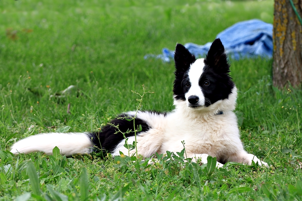 Des connaisseurs en chiens ?  - Page 3 Img_1510
