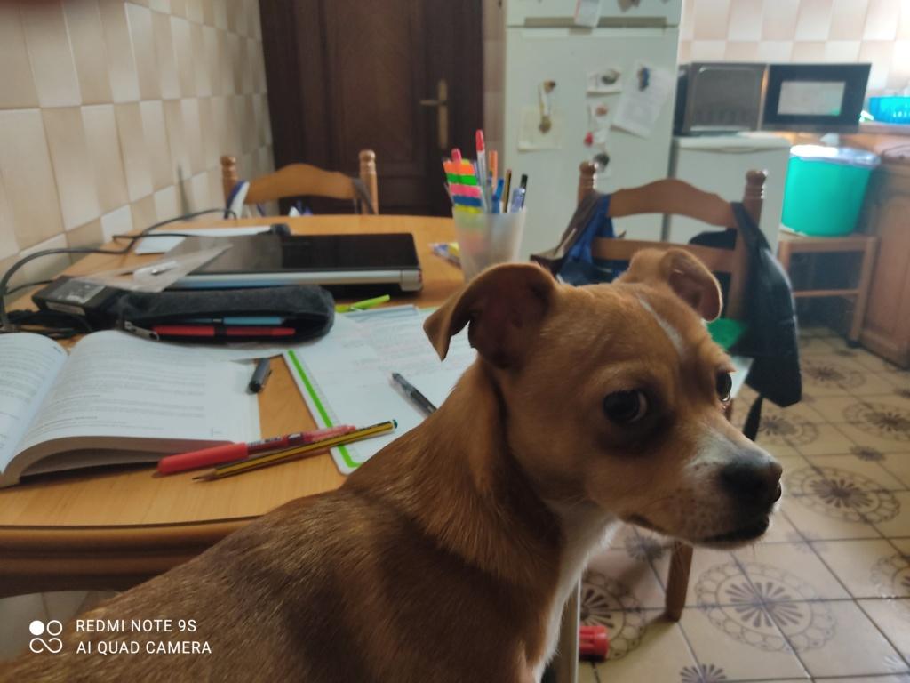 Que pensais de los perros? - Página 15 Img_2067