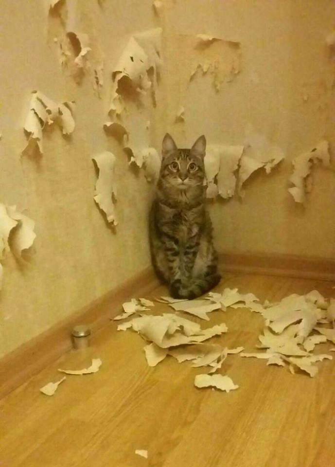 Всемирный День Кошек - Страница 10 34729410