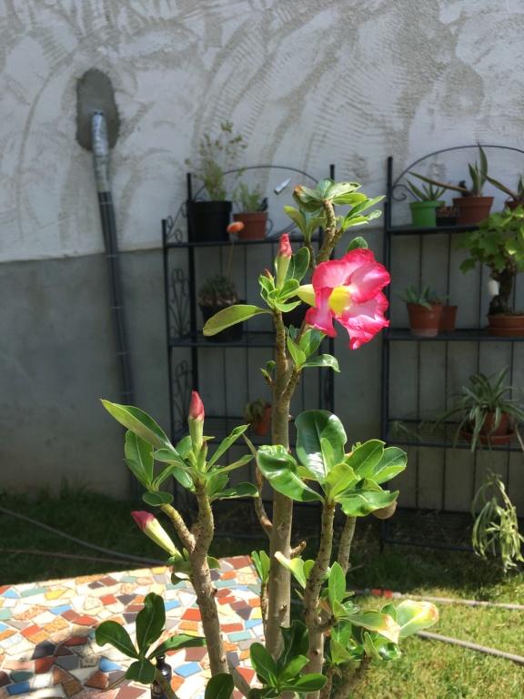 fleurs - Page 3 C3cb8710