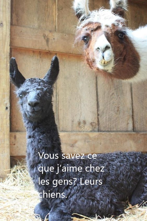 animaux marrants3 - Page 2 F6b87110